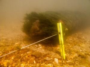 A gauche le fil. A droite le fil + les algues...