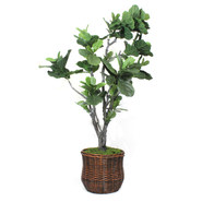Fiddle Leaf Floor Plant in Basket