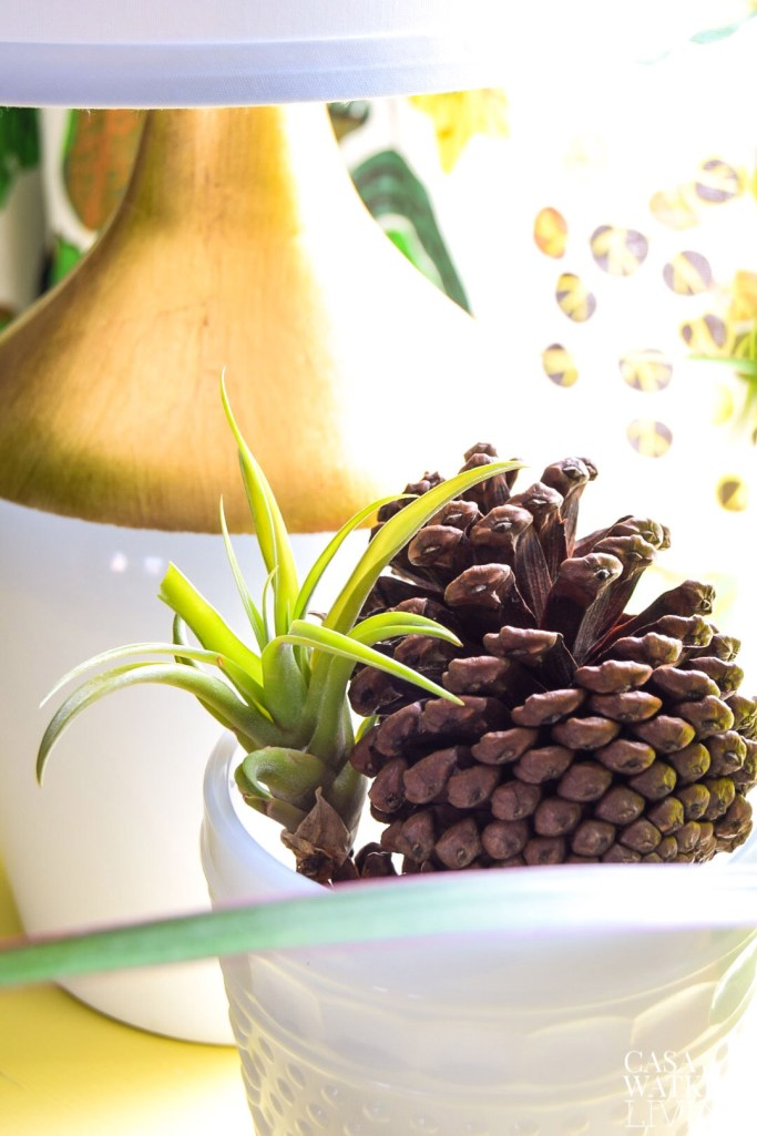 mix air plants with pinecones for winter decorating in the dining room