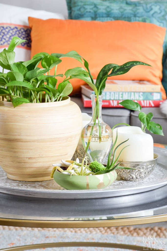 decorating a coffee table with plants