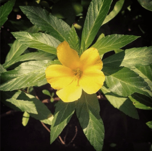 Blooming in our garden.