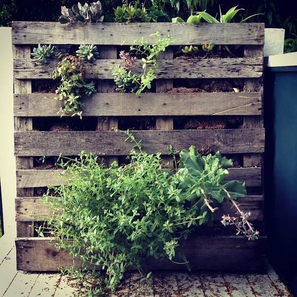 Jardines verticales crea tu oasis con ideas DIY