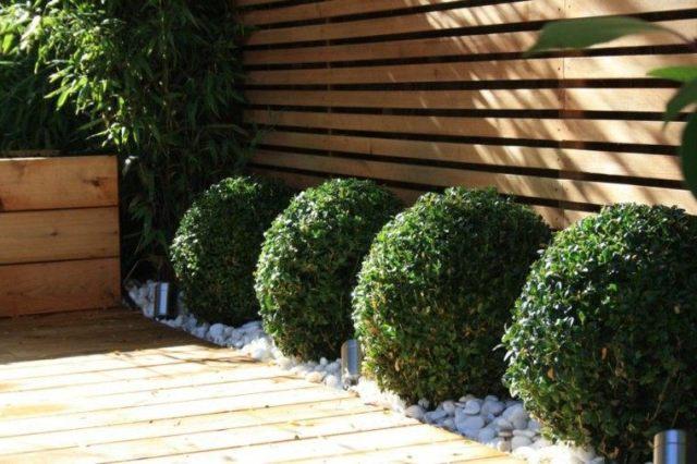 camino jardin setos bolas plantas
