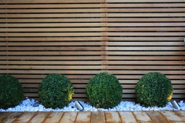 diseño jardin setos bolas camino