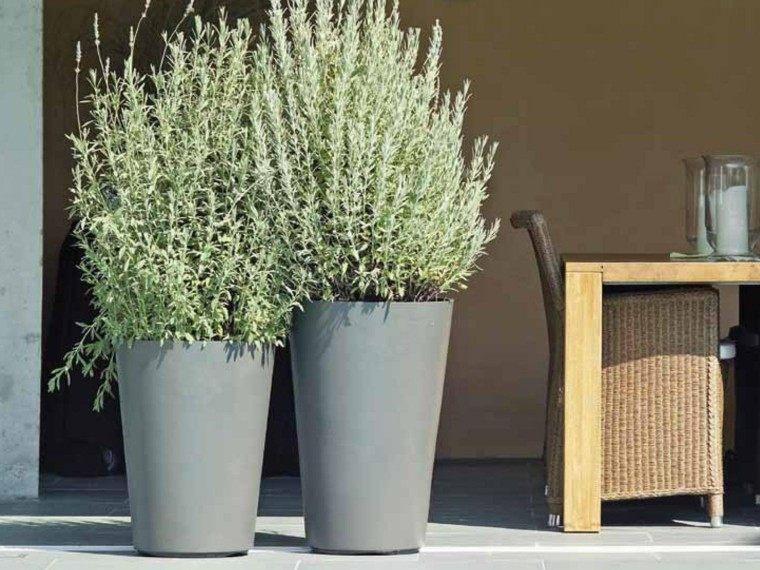 Plantas ornamentales jardn natural ideas preciosas