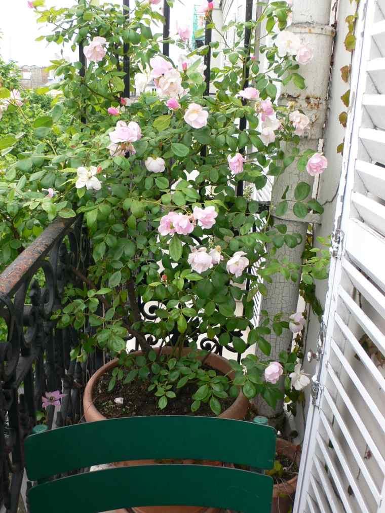 Las plantas y las flores perfectas para el balcn