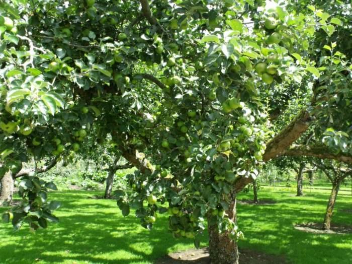 Huerto en casa una fuente inagotable de frutas y vegetales