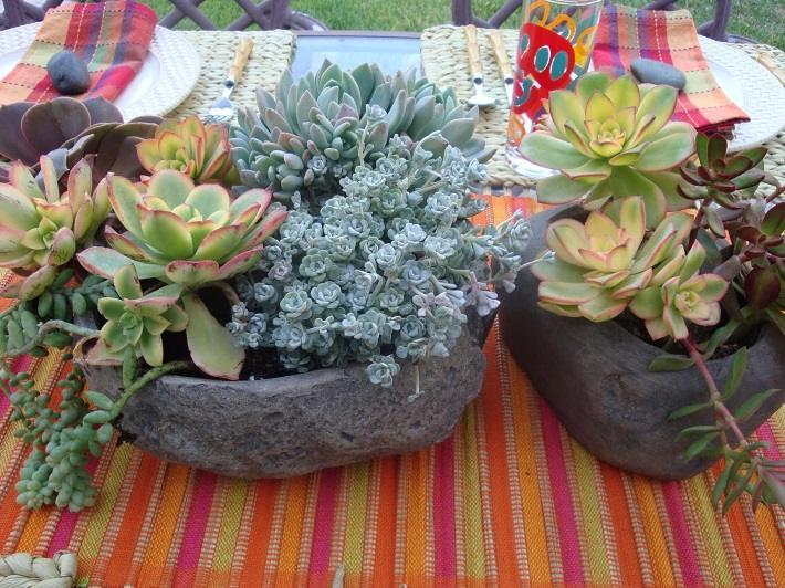 Plantas suculentas para transformar el exterior de la casa