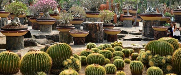 Jardin de cactus  cuarenta y nueve ideas de cmo elaborar
