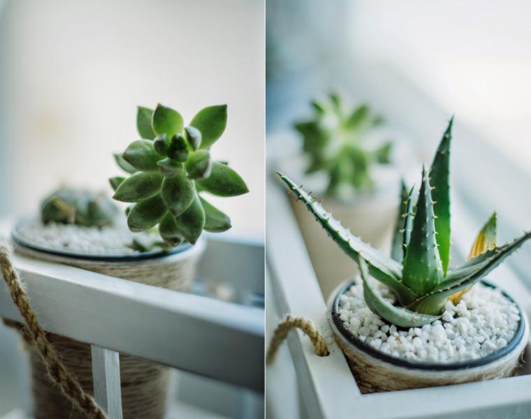 Plantas suculentas para decorar la terraza  24 ideas