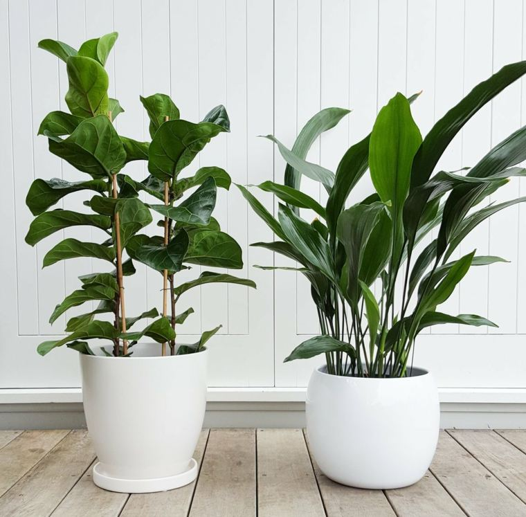 Jardineras modernas para decorar interiores y exteriores