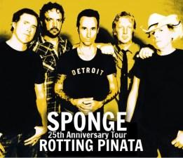 sponge pic 2019