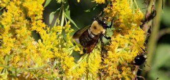 Saluda Shoals Bees