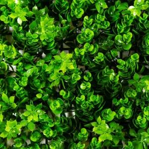 Casacade Greenery Product Photos Jade