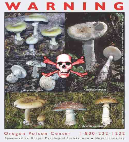 Poisonous Mushrooms Poster from the Oregon Health & Science University