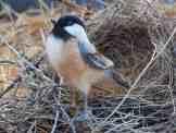 felted-bird