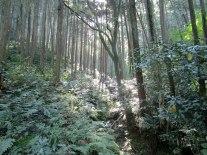 Hiking through the forest on Kannokura Mountain.
