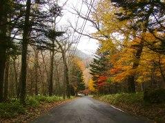 Amazing fall colors on the road to Yutaki Falls
