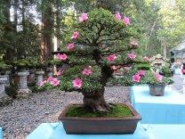 Several wonderful examples of bonsai trees were on display inside Tōshō-gū Shrine