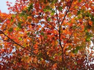 The gorgeous autumn leaves of Nikko!