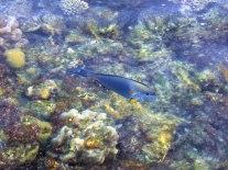 A tropical fish zips through.