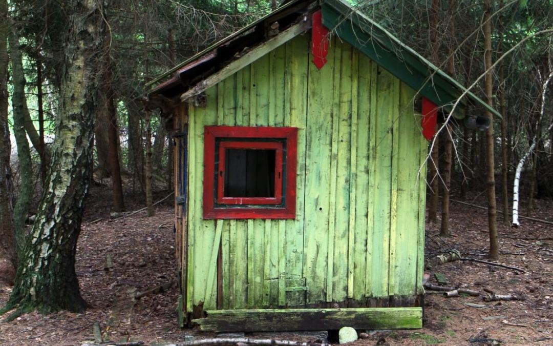 Image of a old shed in the woods