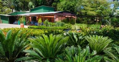 Como o paisagismo influencia nos cuidados ambientais