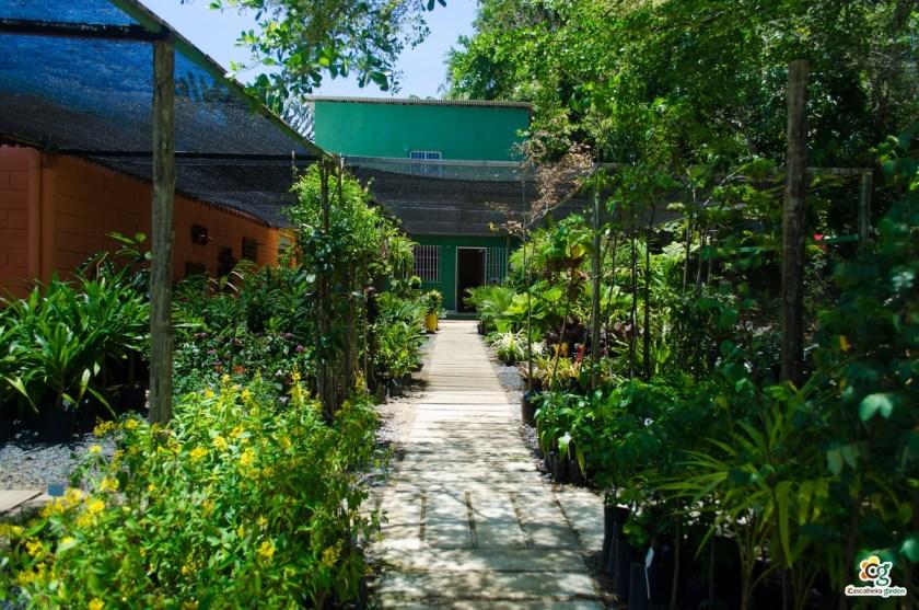 Projeto paisagístico: por que investir em um? - Cascalheira Garden - Jardinagem e Paisagismo Camaçari