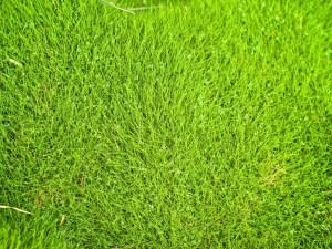 Grama Esmeralda - Cascalheira Garden - Jardinagem e Paisagismo Camaçari