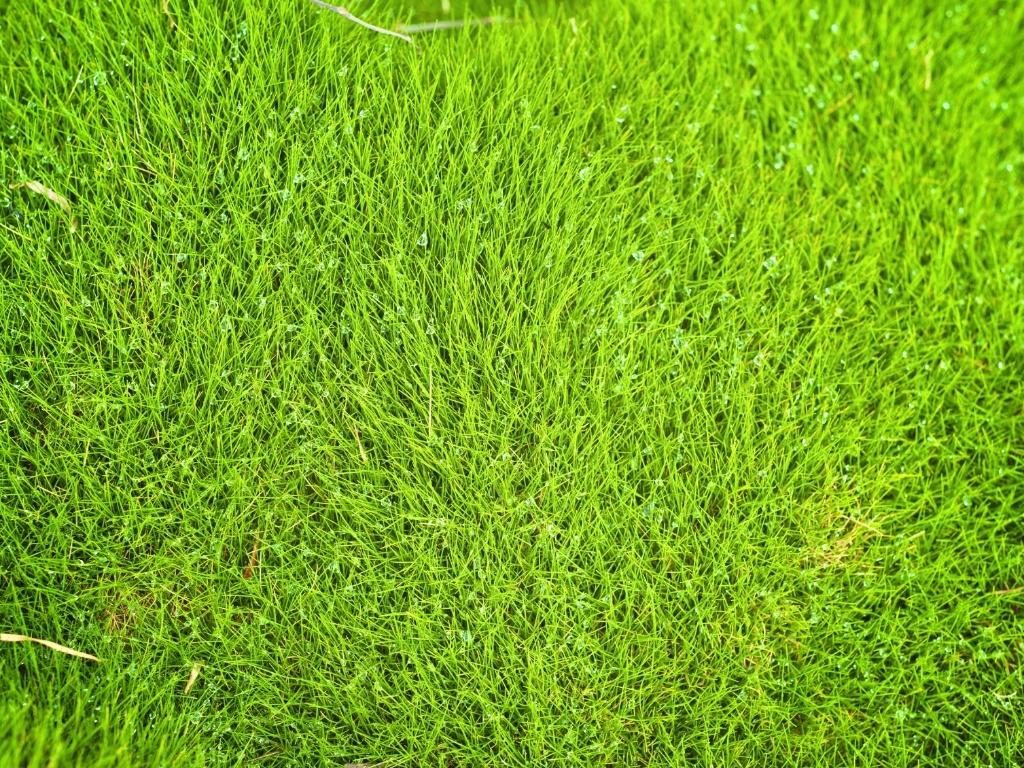 Grama Esmeralda Cascalheira Garden