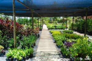 Em um Projeto Paisagístico os jardins não precisam ser apenas espaços secundários - Cascalheira Garden - Jardinagem e Paisagismo Camaçari