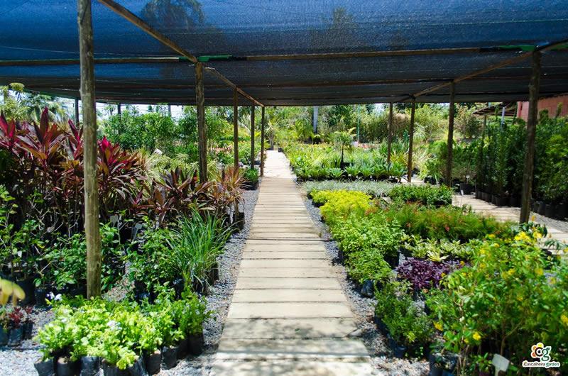 Projeto Paisagístico - Cascalheira Garden - Jardinagem e Paisagismo Camaçari