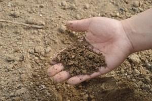 cuidados com solo - Cascalheira Garden - Jardinagem e Paisagismo Camaçari