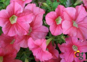 Decore sua casa e jardim com lindas plantas e flores naturais e artificiais - Cascalheira Garden - Jardinagem e Paisagismo Camaçari