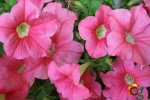 https://cascalheiragarden.com.br/plantas-naturais-e-artificiais-para-decoracao/