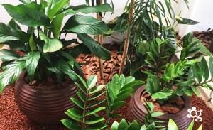 vasos-ornamentados - Cascalheira Garden - Jardinagem e Paisagismo Camaçari