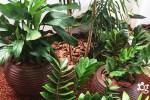 https://cascalheiragarden.com.br/10-plantas-ornamentais-capazes-de-revitalizar-qualquer-ambiente/