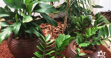10 Plantas ornamentais capazes de revitalizar qualquer ambiente
