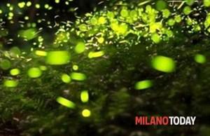 """21 maggio – Milano Today: """"Cascina Linterno, tornano le passeggiate tra le Lucciole"""""""