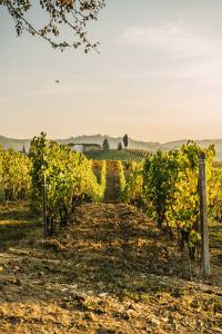 Bed and Breakfast Langhe