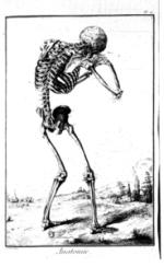 Anatomy page