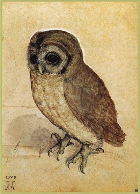 The Little Owl, Albrecht Durer