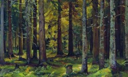 Fir Forest by Ivan Shishkin