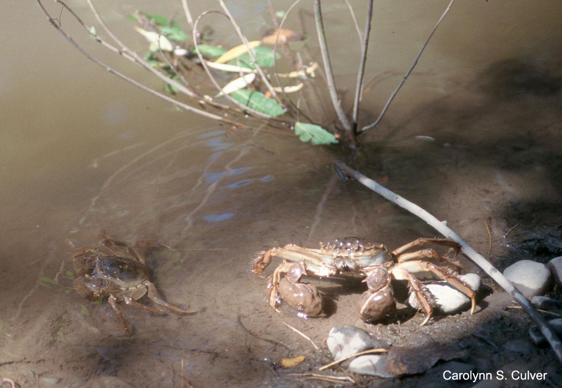 Aquatic Invasive Species Eradication Amp Control