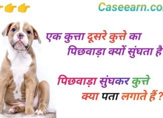 कुत्ते एक दूसरे का पिछवाड़ा क्यों सूंघते हैं। kutte ek doosare ka pichhavaada kyon soonghate hain.