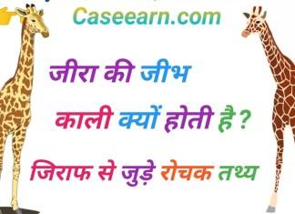 जिराफ की जीभ काली क्यों होती है। kis janwar ki jibh kali hoti hai. giraffe in hindi.