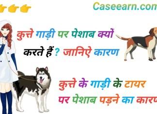 कुत्ते गाड़ी पर पेशाब क्यों करते हैं? कुत्ते गाड़ी पर पेशाब क्यों करते हैं गाड़ी के टायर पर ही पेशाब क्यों करते है कुत्ते?