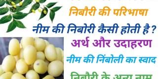 kaisi Hoti Hai neem ki nimboli. नीम की निबोरी कैसी होती है ?