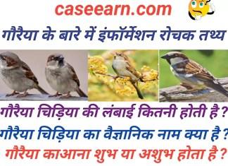 गौरैया के बारे में इंफॉर्मेशन रोचक तथ्य । sparrow ( स्पैरो ) in hindi . About Sparrow in Hindi