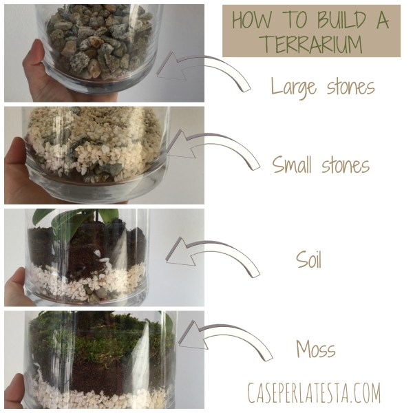 How_to_build_a_terrarium